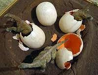 reconstrucción de huevos de dinosaurios encontrados