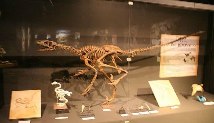 Descubrimiento Compsognathus