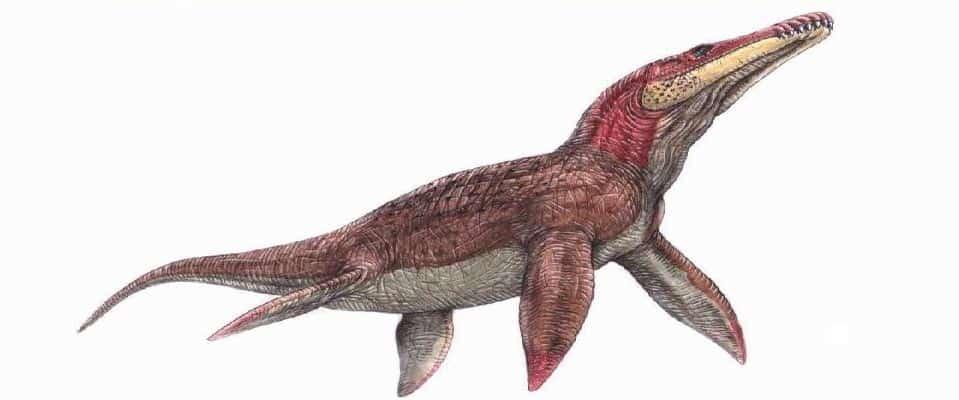liopleurodon peligroso marino