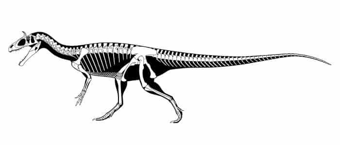 Descripción del Cryiolophosaurus