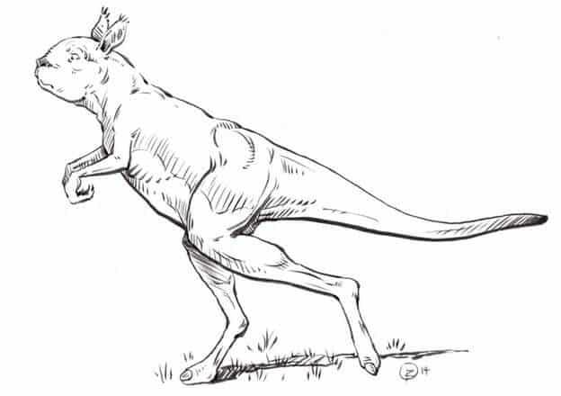 Descripción del Procoptodon