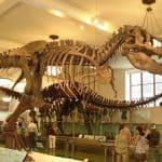 restos hallados de este dinosaurio tan mítico llamado tyrannosaurus rex