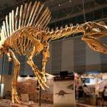 restos encontrados de este dinosaurio llamado spinosaurus