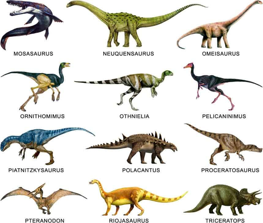 Dinosaurioss com toda la informaci n sobre dinosaurios - Nombres clasicos espanoles ...