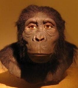 Australopithecus anamensis cara