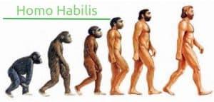 homo_habilis - evolucion del hombre