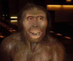 lucy - australopithecus afarensis