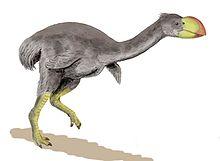 Dromornis
