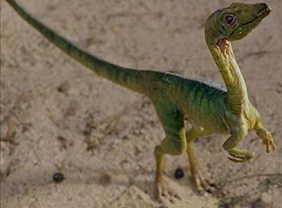 Compsognathus – dinosaurio carnívoro