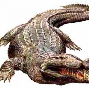 Deinosuchus – dinosaurio marino