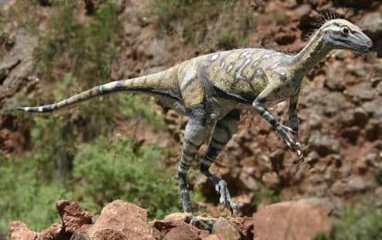 Eoraptor – dinosaurio carnívoro
