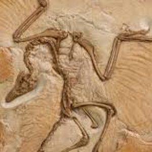 archaeopteryx fosilizado