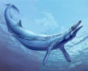 basilosaurio