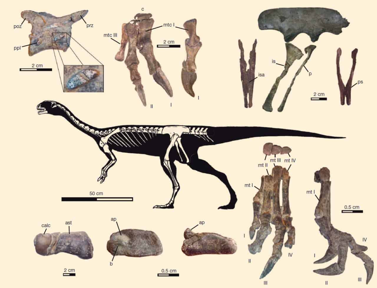 Dinosaurio Ornitorrinco