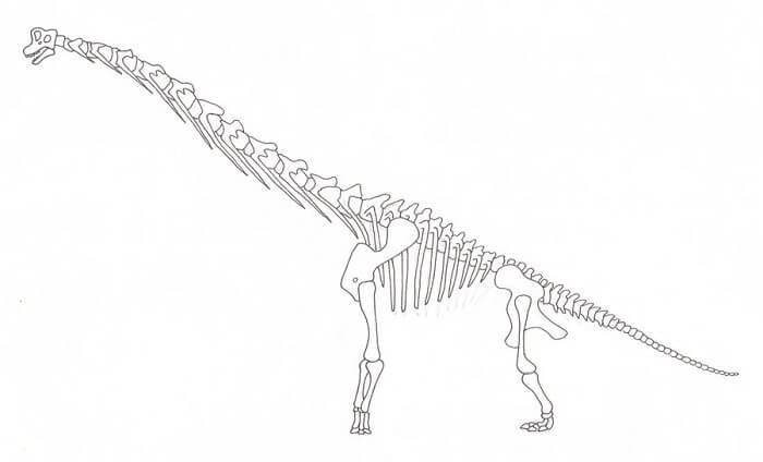 Descripción sobre Brachilosaurus