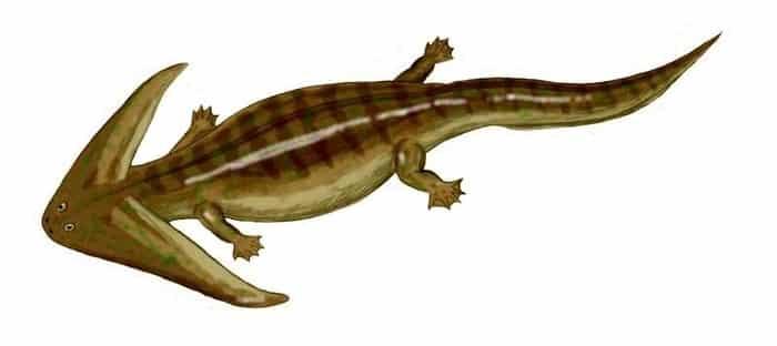 Descripción sobre el Diplocaulus