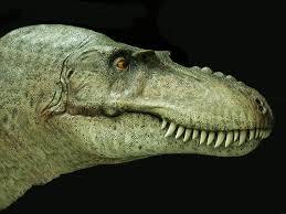 gorgosaurus - cabeza