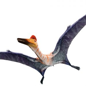 Pterodactylus – dinosaurios voladores