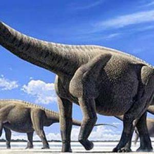 amphicoelias – dinosaurio herbivoro