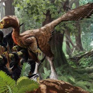 troodon – dinosaurio omnivoro