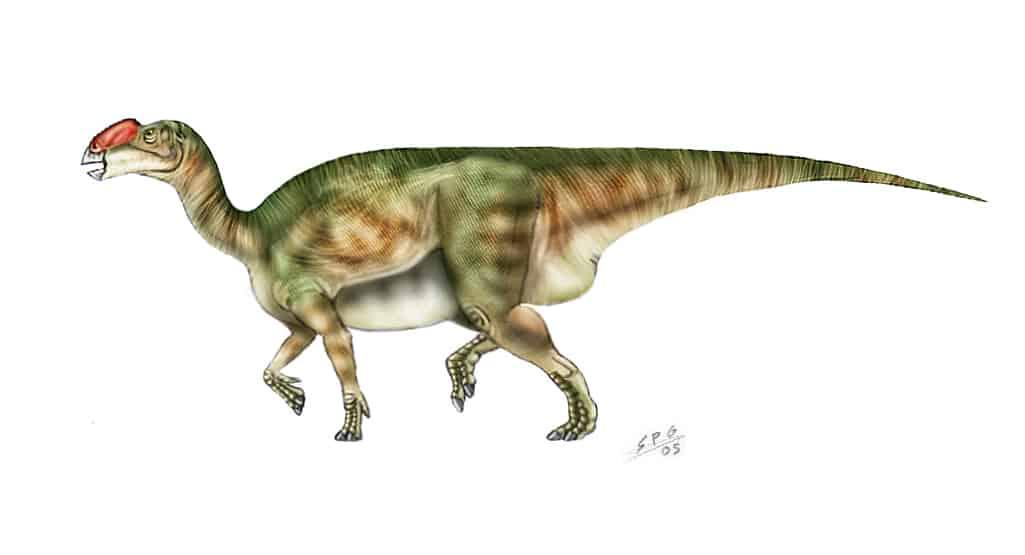 dinosaurio Muttaburrasaurus